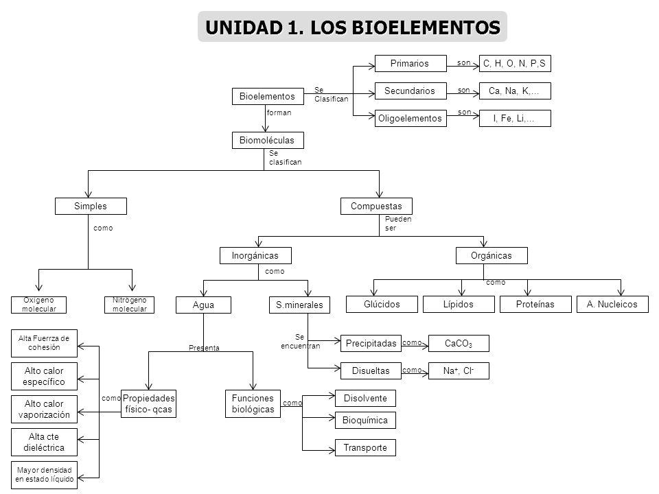 UNIDAD 1. LOS BIOELEMENTOS