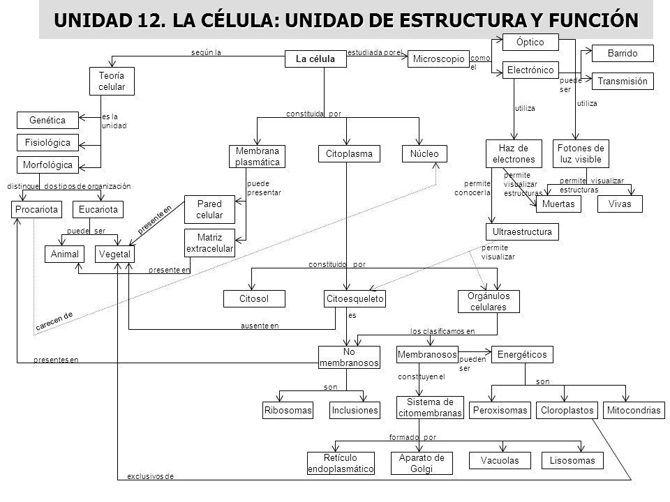 UNIDAD 12. LA CÉLULA: UNIDAD DE ESTRUCTURA Y FUNCIÓN