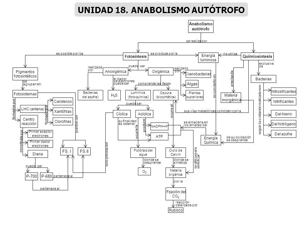 UNIDAD 18. ANABOLISMO AUTÓTROFO