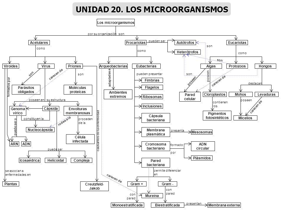 UNIDAD 20. LOS MICROORGANISMOS