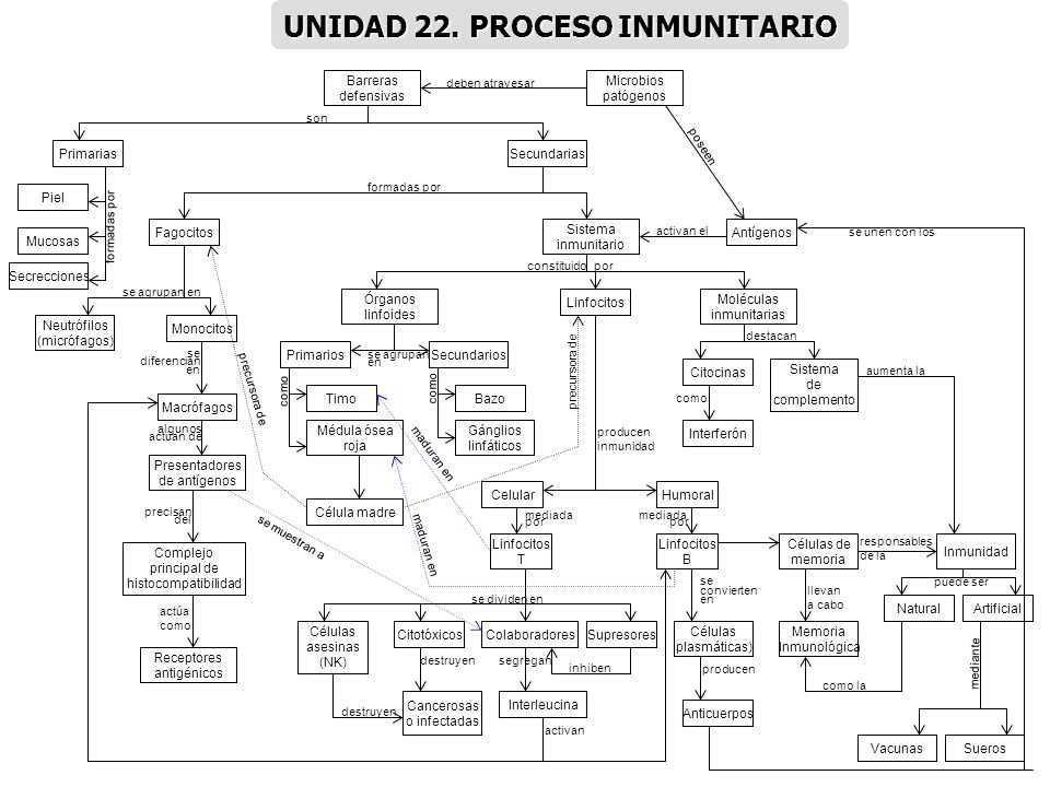 UNIDAD 22. PROCESO INMUNITARIO