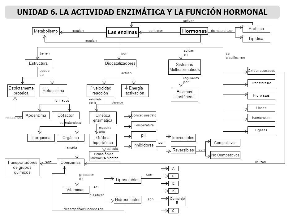 UNIDAD 6. LA ACTIVIDAD ENZIMÁTICA Y LA FUNCIÓN HORMONAL