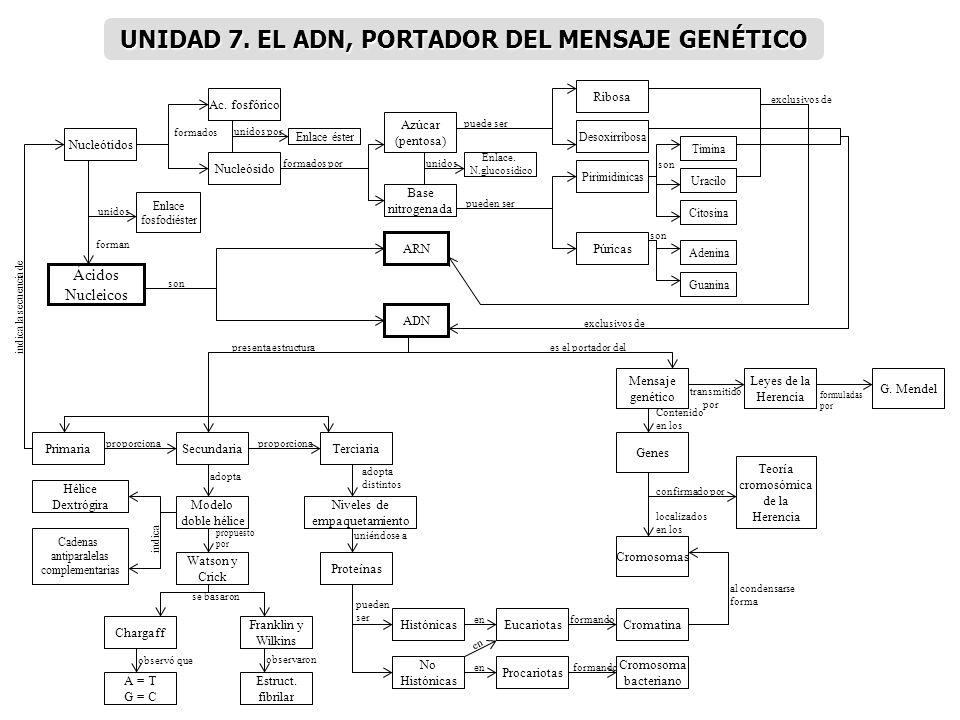 UNIDAD 7. EL ADN, PORTADOR DEL MENSAJE GENÉTICO