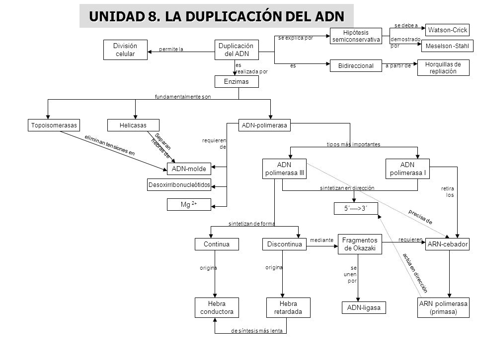 UNIDAD 8. LA DUPLICACIÓN DEL ADN