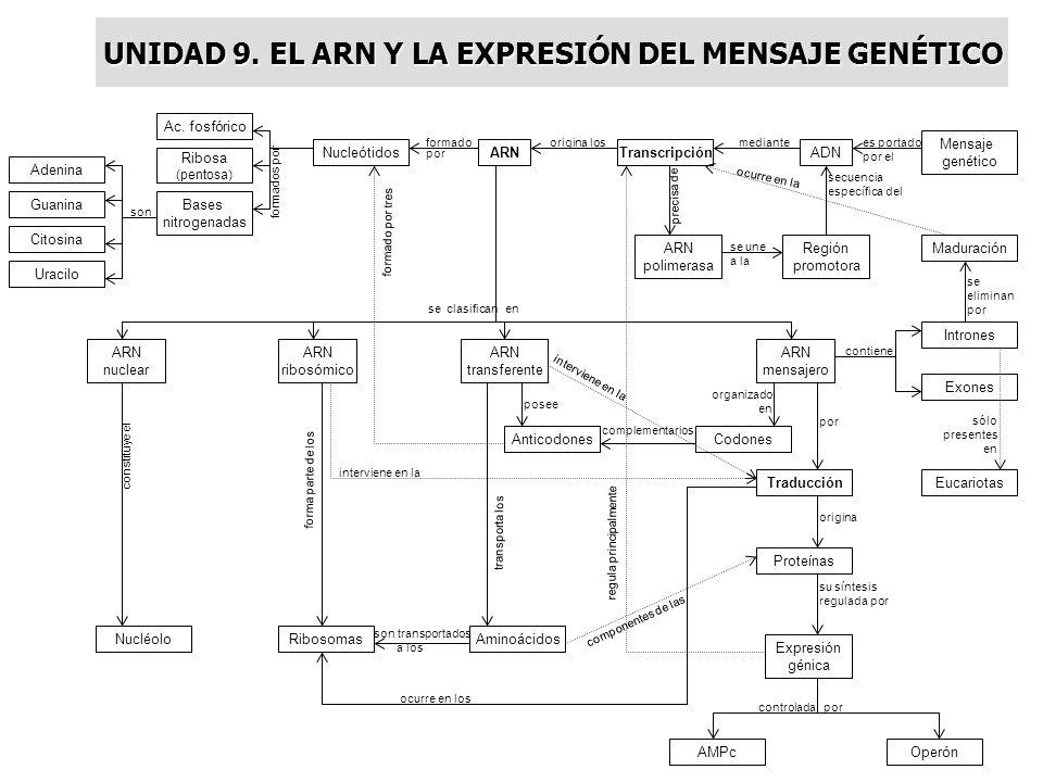 UNIDAD 9. EL ARN Y LA EXPRESIÓN DEL MENSAJE GENÉTICO
