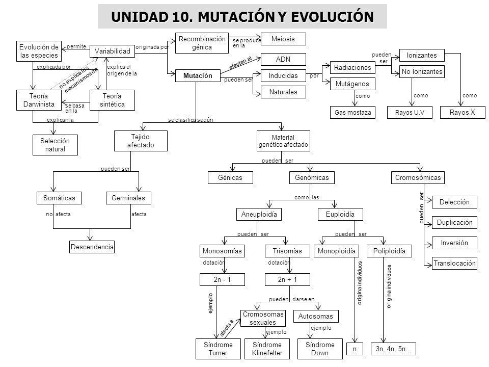 UNIDAD 10. MUTACIÓN Y EVOLUCIÓN