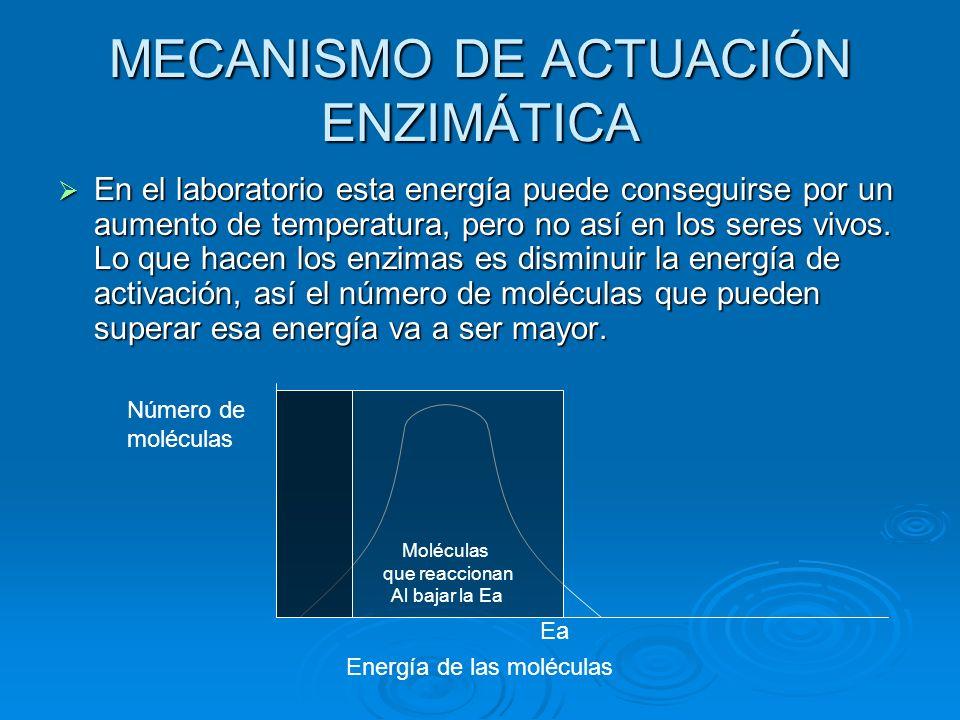 MECANISMO DE ACTUACIÓN ENZIMÁTICA
