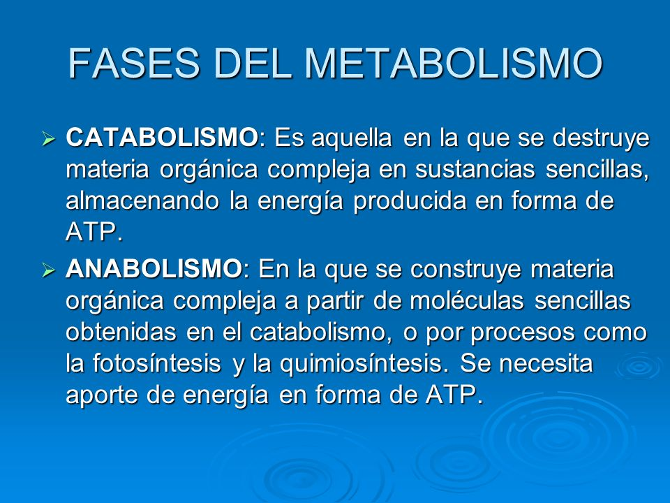 FASES DEL METABOLISMO