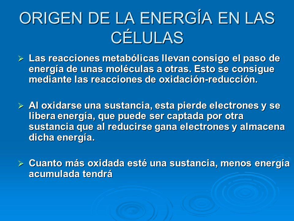 ORIGEN DE LA ENERGÍA EN LAS CÉLULAS