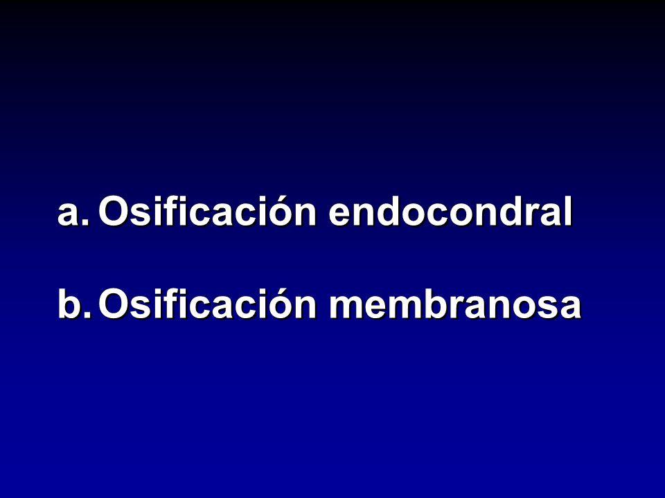 a. Osificación endocondral