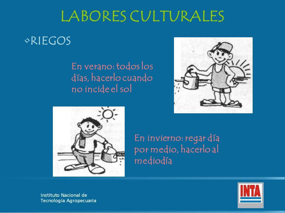 LABORES CULTURALES RIEGOS