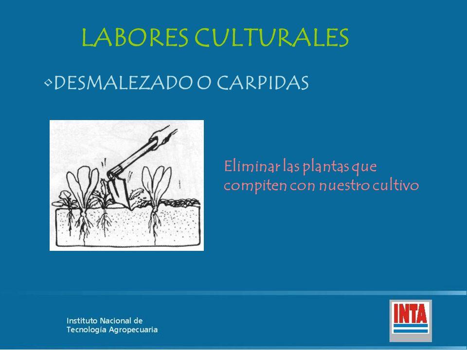 LABORES CULTURALES DESMALEZADO O CARPIDAS