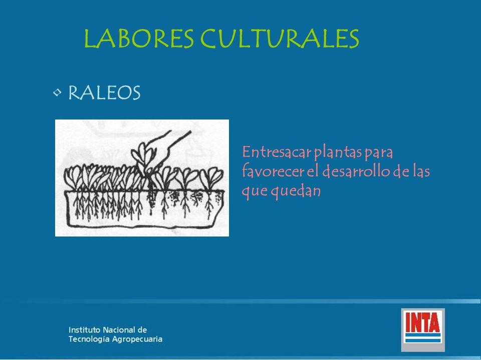 LABORES CULTURALES RALEOS