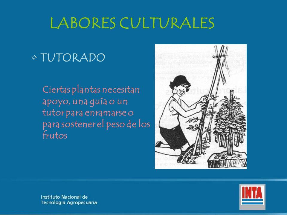 LABORES CULTURALES TUTORADO
