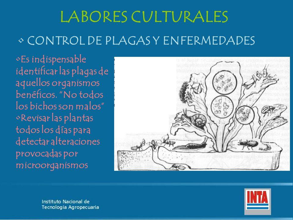 LABORES CULTURALES CONTROL DE PLAGAS Y ENFERMEDADES