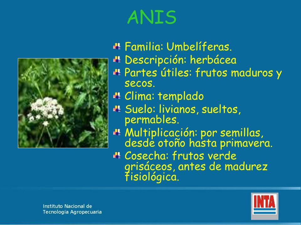 ANIS Familia: Umbelíferas. Descripción: herbácea