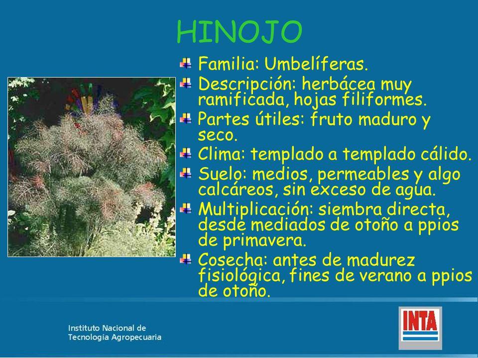HINOJO Familia: Umbelíferas.
