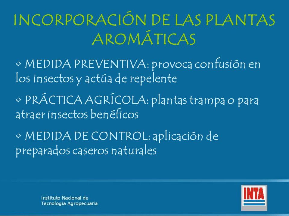 INCORPORACIÓN DE LAS PLANTAS AROMÁTICAS