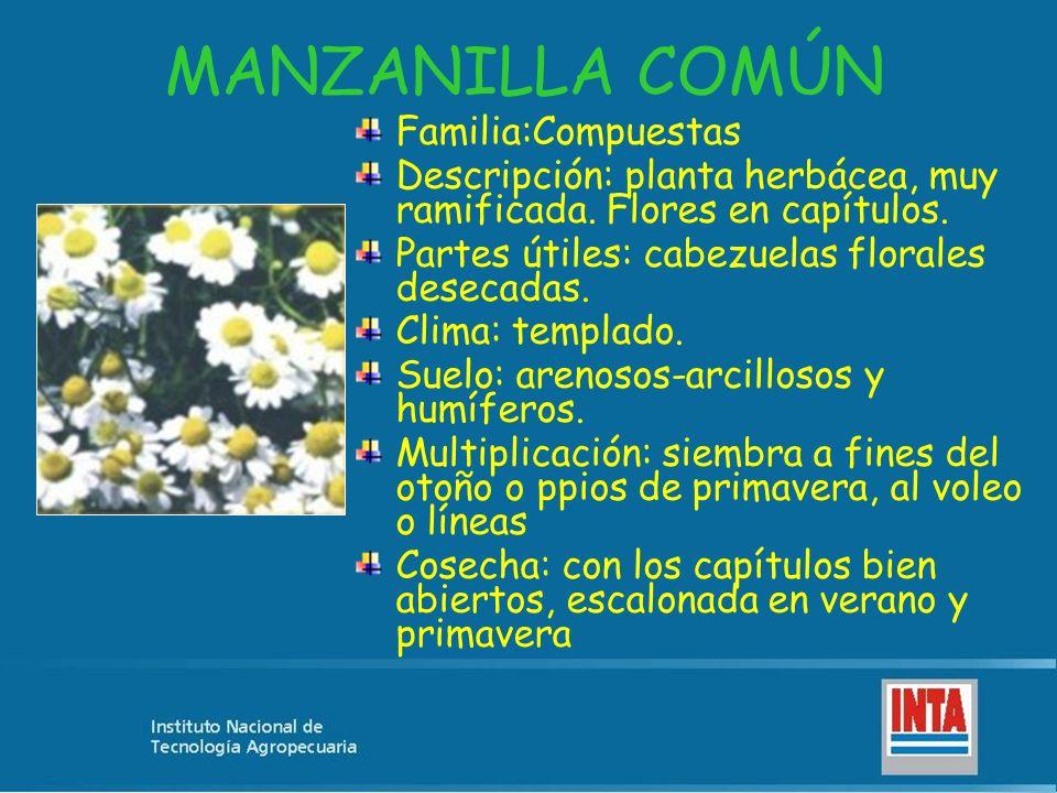 MANZANILLA COMÚN Familia:Compuestas