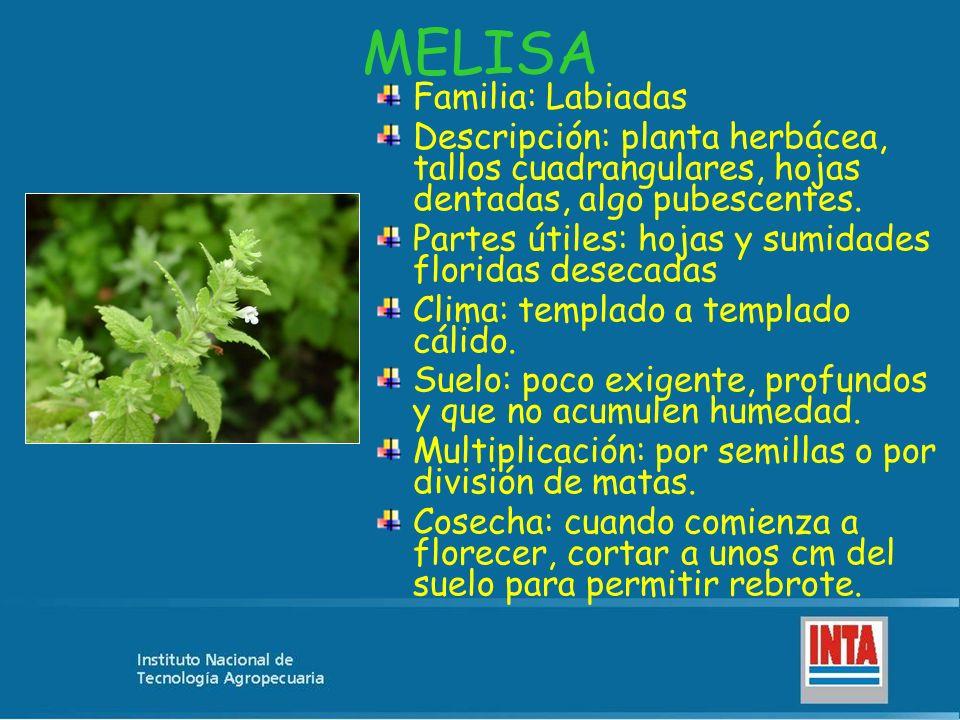 MELISA Familia: Labiadas