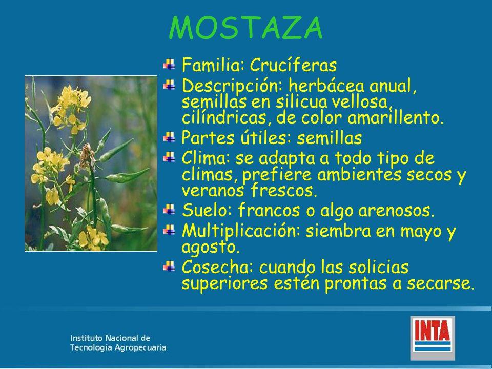 MOSTAZA Familia: Crucíferas