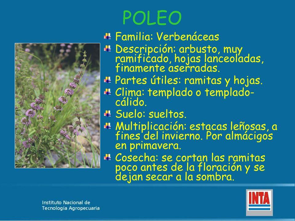 POLEO Familia: Verbenáceas