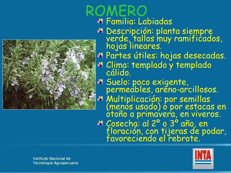 ROMERO Familia: Labiadas