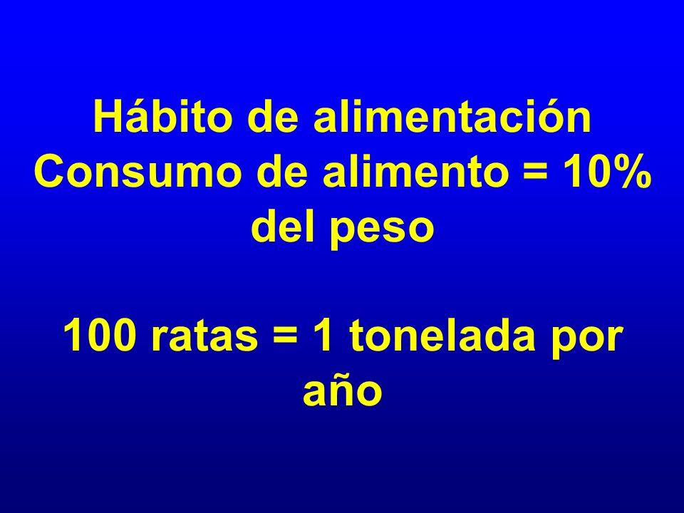 Hábito de alimentación Consumo de alimento = 10% del peso 100 ratas = 1 tonelada por año