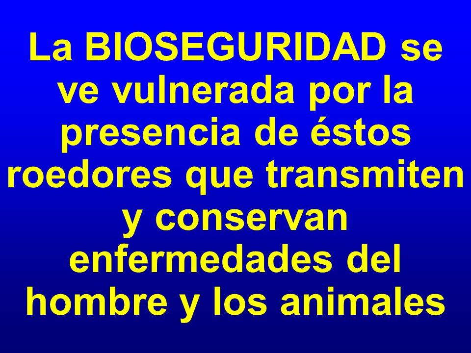 La BIOSEGURIDAD se ve vulnerada por la presencia de éstos roedores que transmiten y conservan enfermedades del hombre y los animales