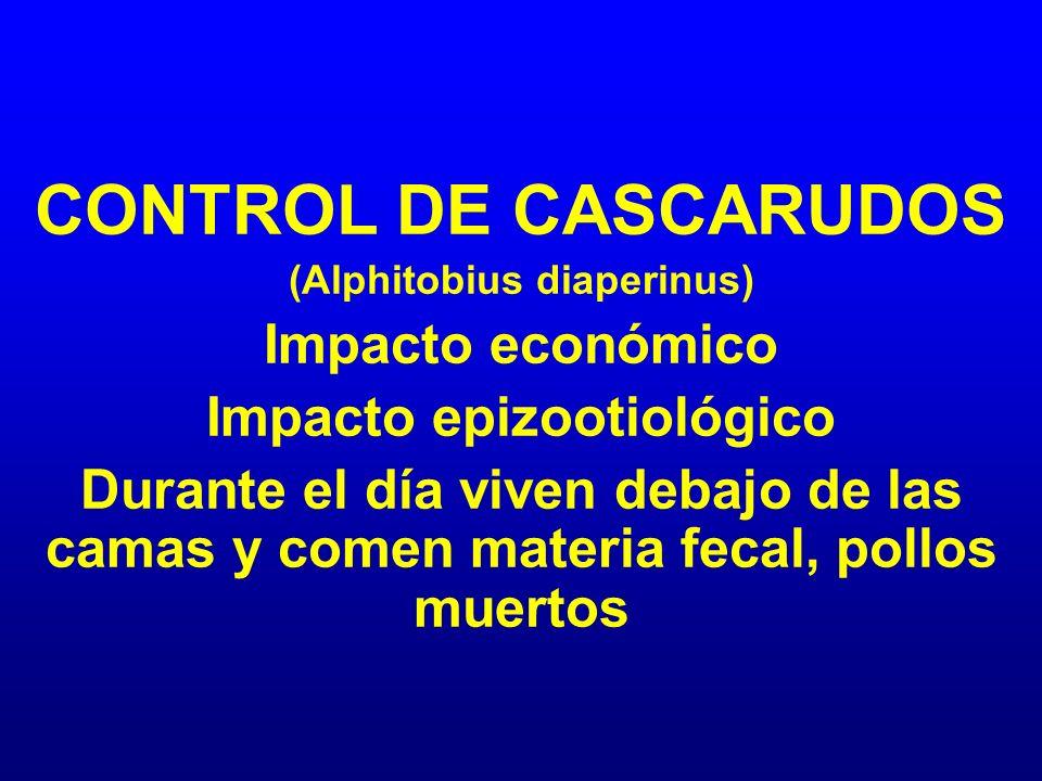 (Alphitobius diaperinus) Impacto epizootiológico
