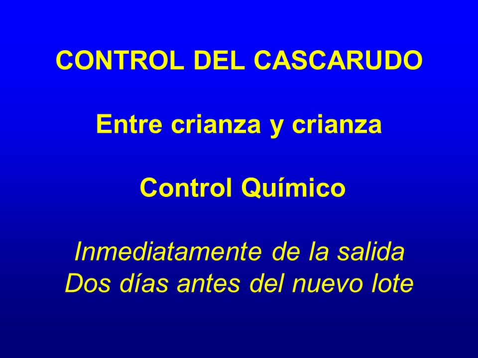 CONTROL DEL CASCARUDO Entre crianza y crianza Control Químico Inmediatamente de la salida Dos días antes del nuevo lote