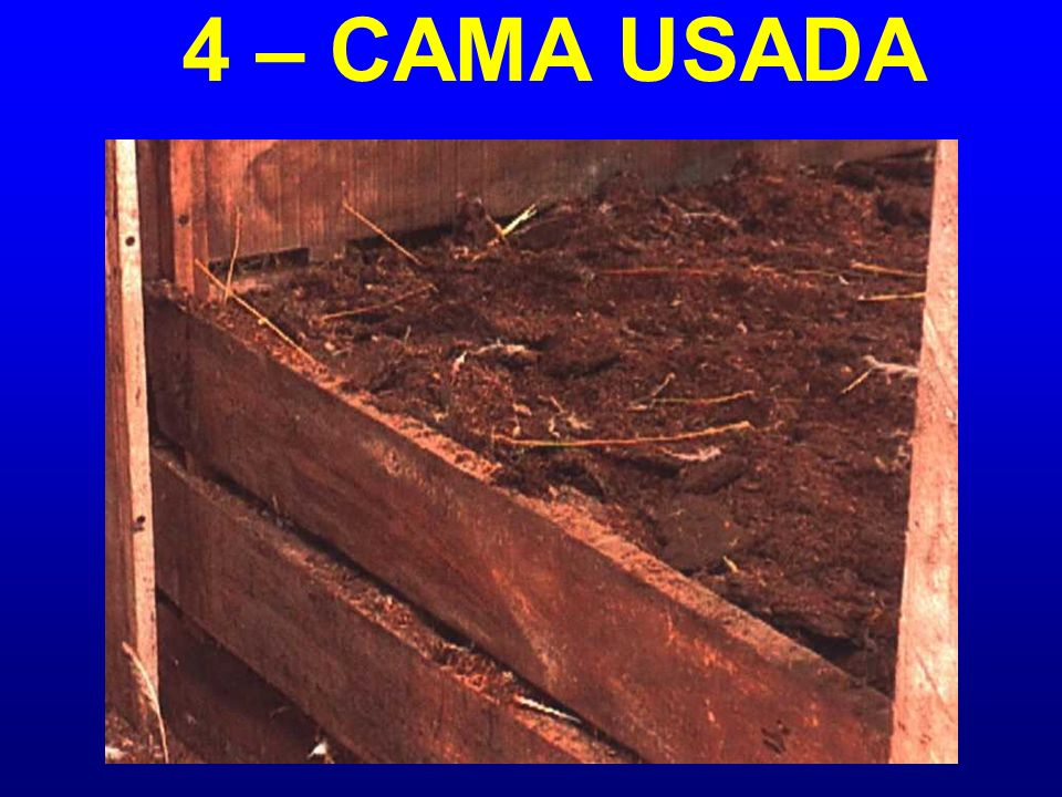 4 – CAMA USADA