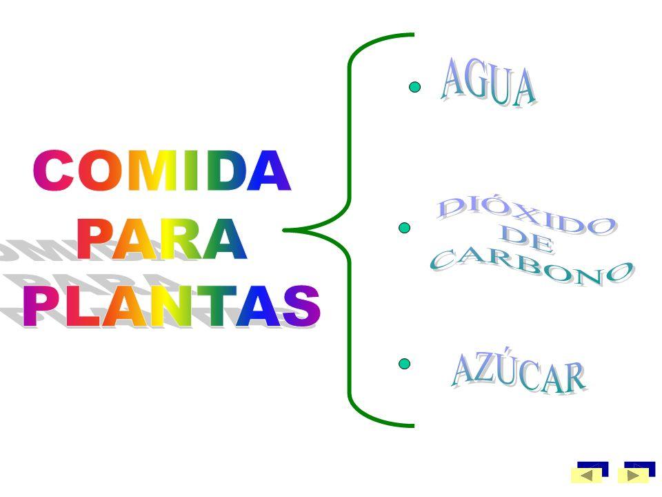 AGUA COMIDA PARA PLANTAS DIÓXIDO DE CARBONO AZÚCAR