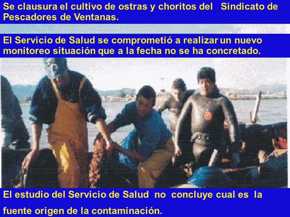 Se clausura el cultivo de ostras y choritos del Sindicato de Pescadores de Ventanas.