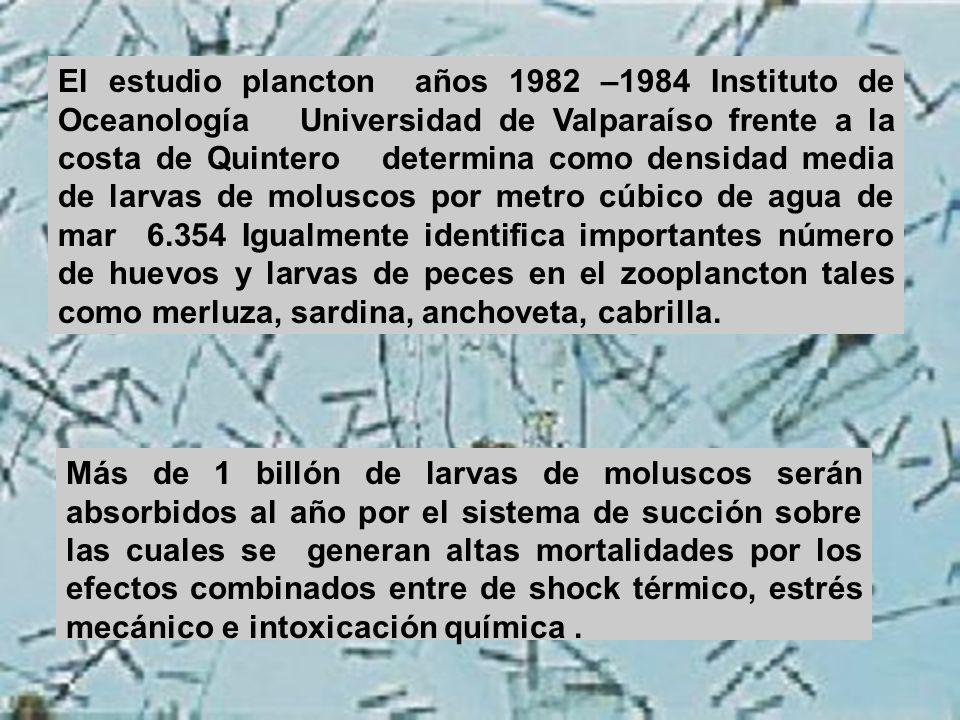 El estudio plancton años 1982 –1984 Instituto de Oceanología Universidad de Valparaíso frente a la costa de Quintero determina como densidad media de larvas de moluscos por metro cúbico de agua de mar 6.354 Igualmente identifica importantes número de huevos y larvas de peces en el zooplancton tales como merluza, sardina, anchoveta, cabrilla.