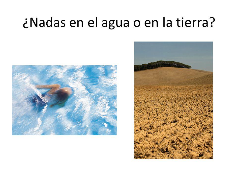 ¿Nadas en el agua o en la tierra