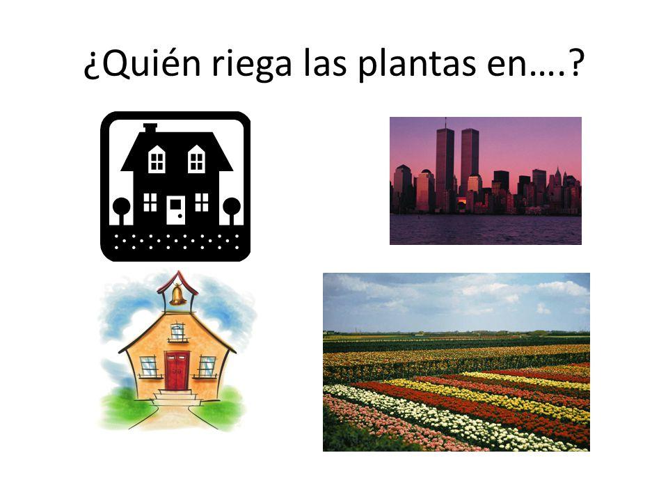 ¿Quién riega las plantas en….