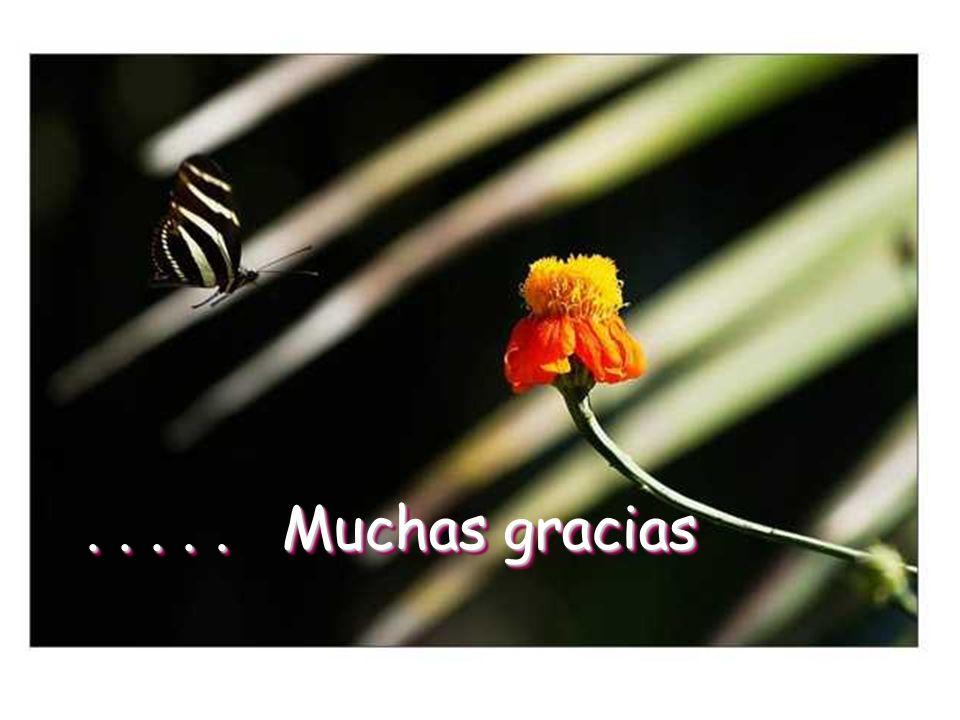 . . . . . Muchas gracias