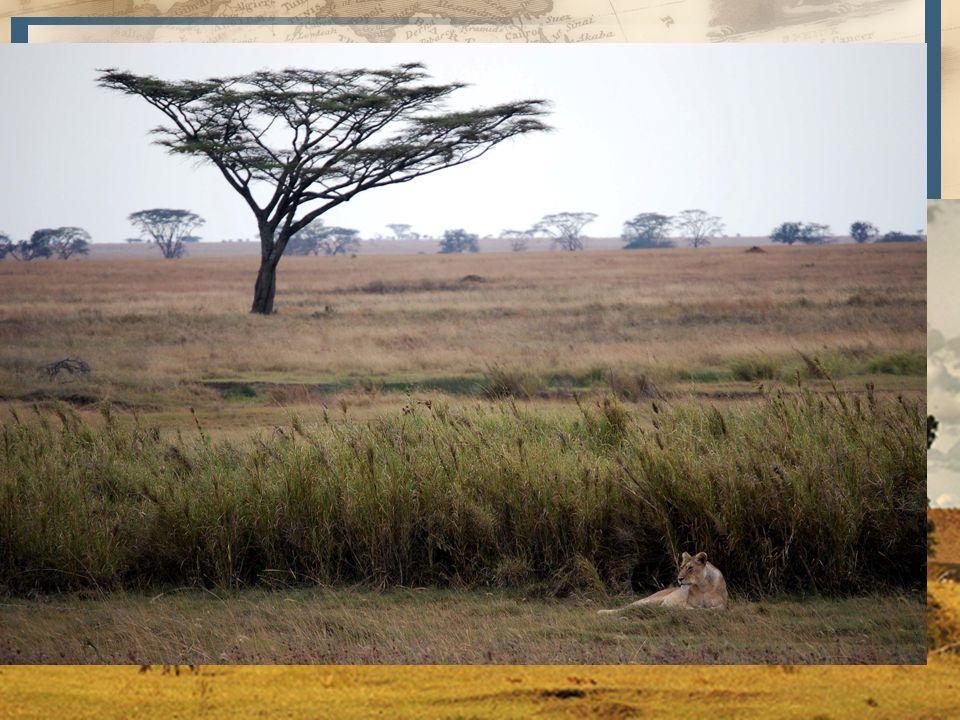 SudánEste a Oeste, limitado por el Sahara, O. Atlántico, y macizo de Abisinia. Nilo Blanco, lago Tchad, río Níger y río Senegal.