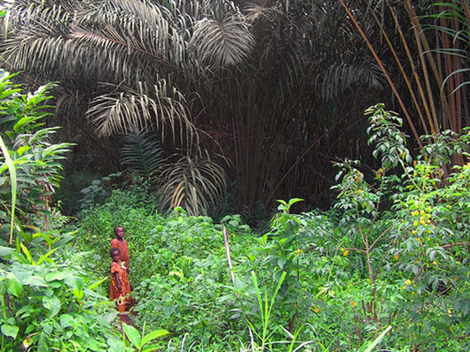 África Central (Valle del Congo)