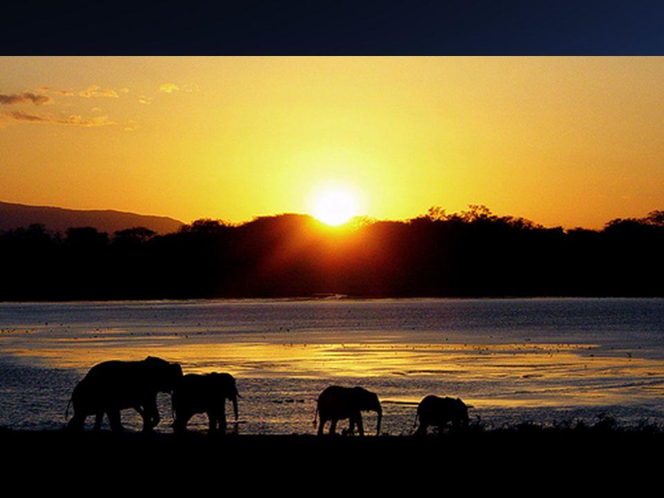 África OrientalMar Rojo, Río Zambeze, O. Índico, Sudán y Valle del Congo. Altas tierras y lagos (más de 1000 mts) y fosas tectónicas.