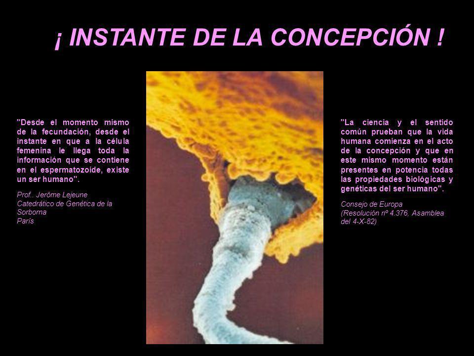 ¡ INSTANTE DE LA CONCEPCIÓN !