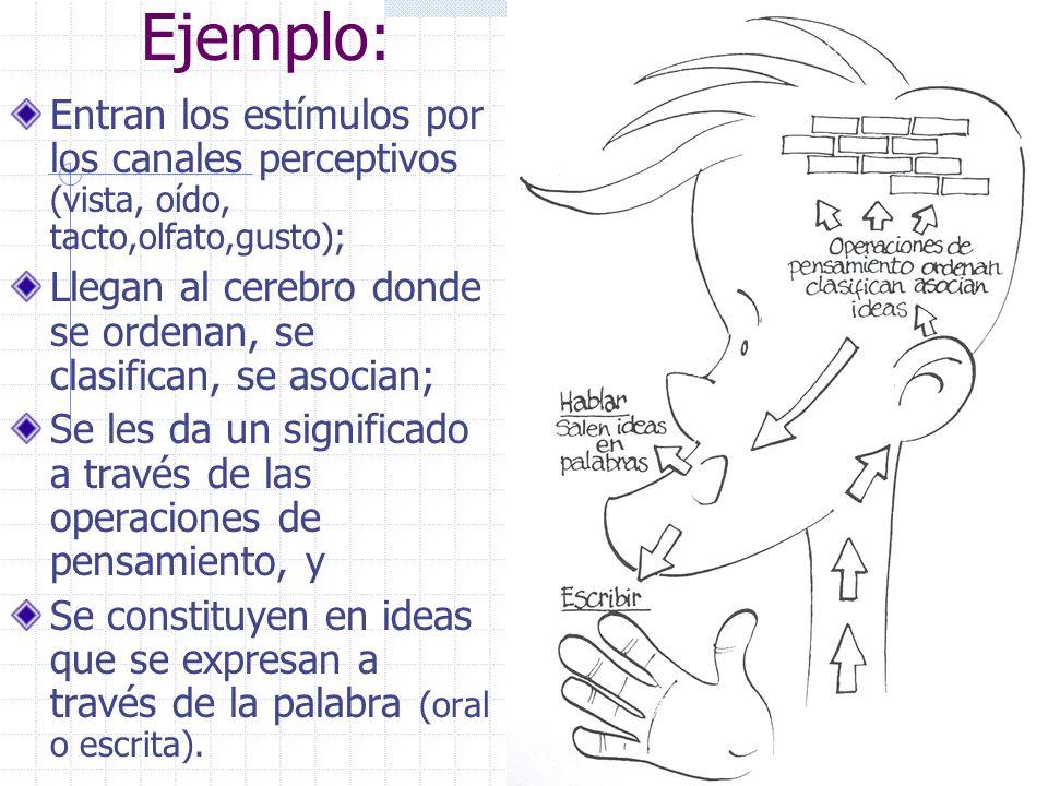 Ejemplo: Entran los estímulos por los canales perceptivos (vista, oído, tacto,olfato,gusto);