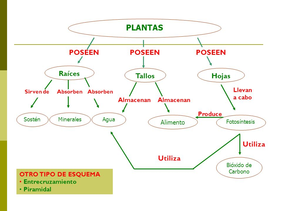 Produce PLANTAS POSEEN POSEEN POSEEN Raíces Tallos Hojas Utiliza