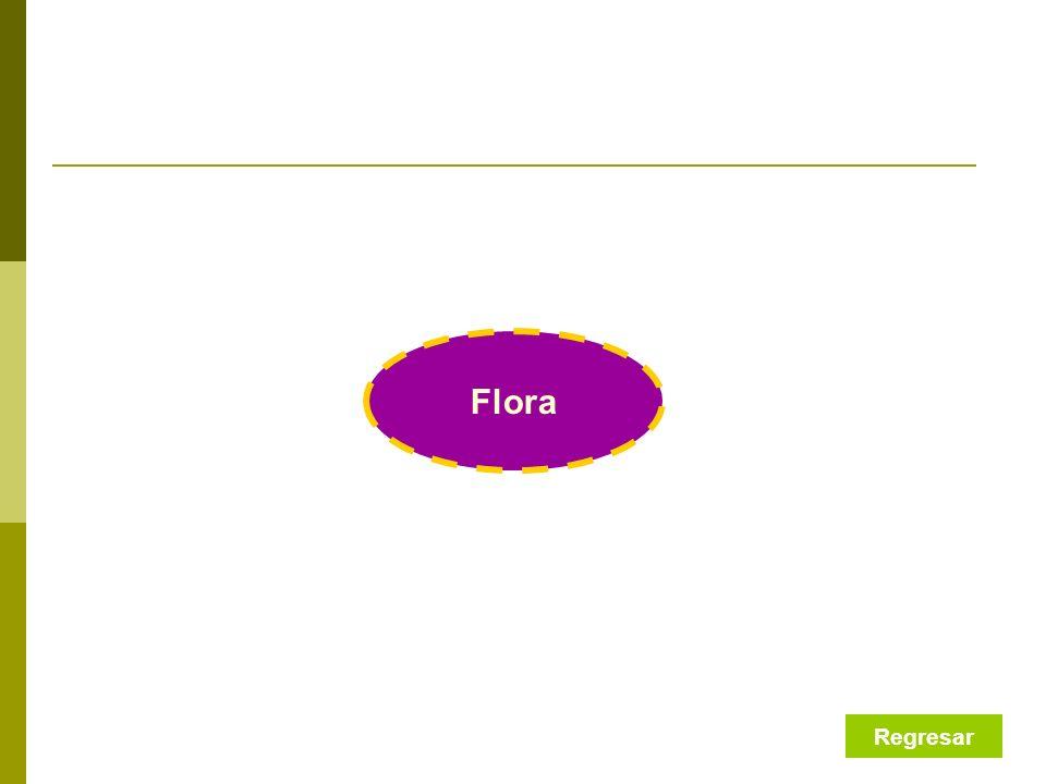 Flora Regresar