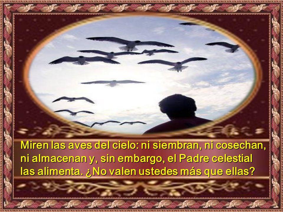 Miren las aves del cielo: ni siembran, ni cosechan, ni almacenan y, sin embargo, el Padre celestial las alimenta.
