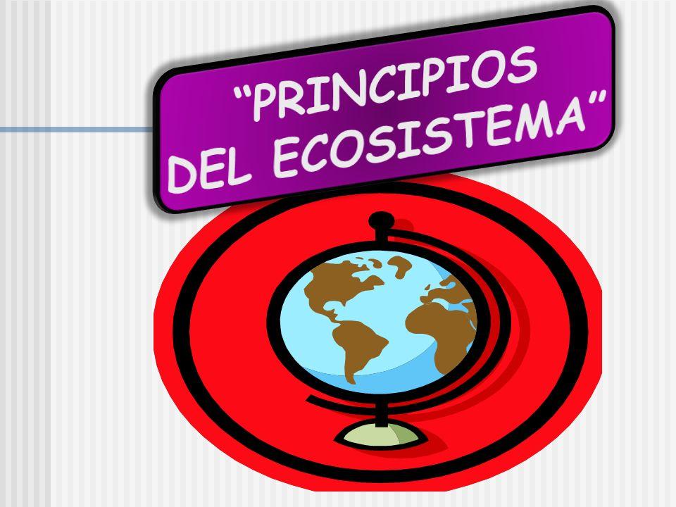 PRINCIPIOS DEL ECOSISTEMA