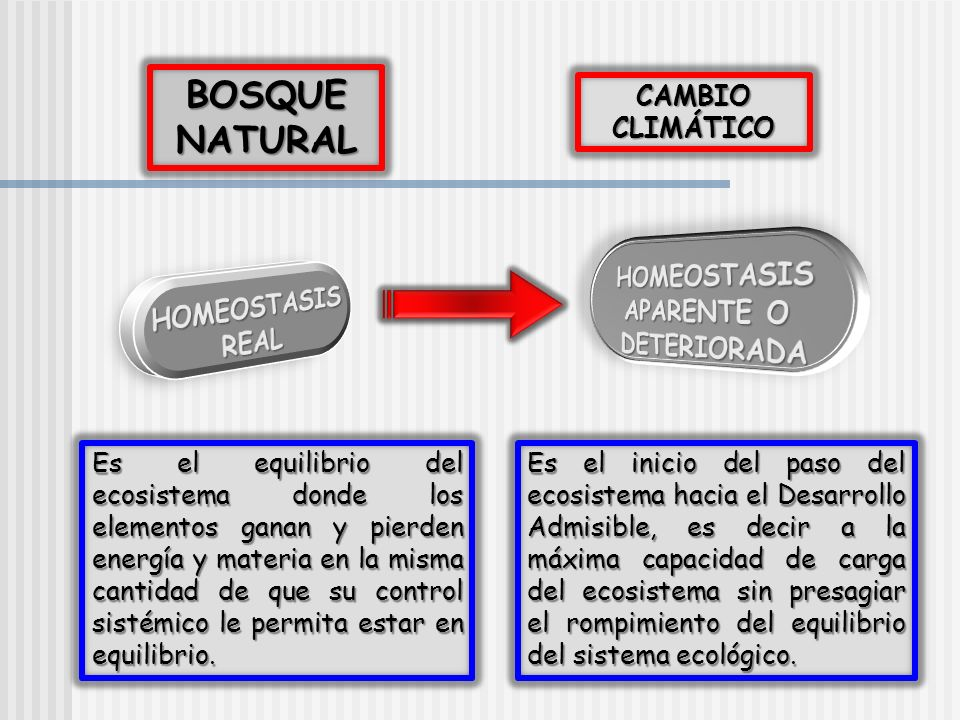 BOSQUE NATURAL HOMEOSTASIS APARENTE O HOMEOSTASIS DETERIORADA REAL