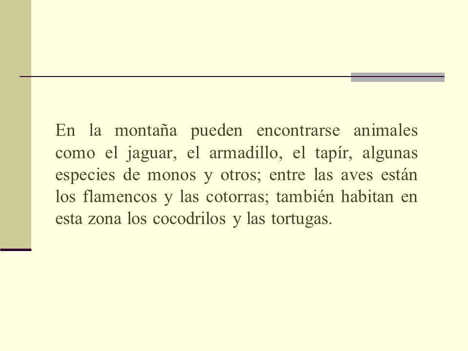 En la montaña pueden encontrarse animales como el jaguar, el armadillo, el tapír, algunas especies de monos y otros; entre las aves están los flamencos y las cotorras; también habitan en esta zona los cocodrilos y las tortugas.