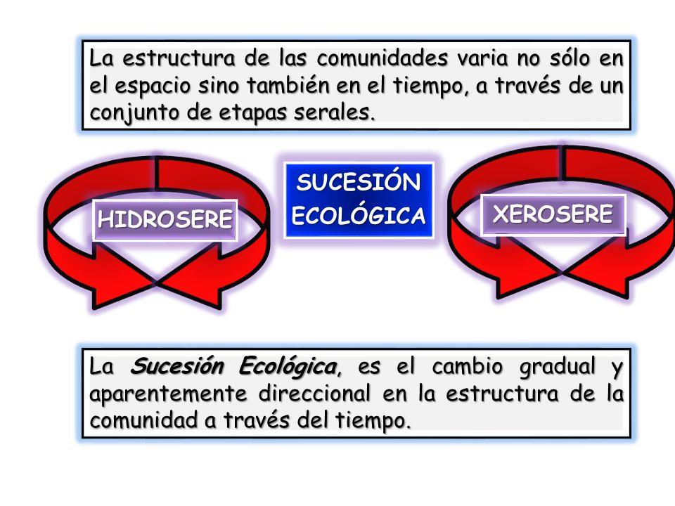 La estructura de las comunidades varia no sólo en el espacio sino también en el tiempo, a través de un conjunto de etapas serales.